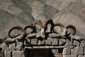 Ibex heads at the entrance