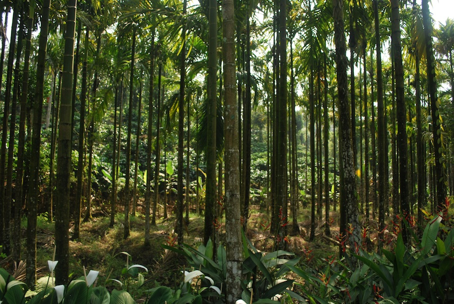 Kerala greenery