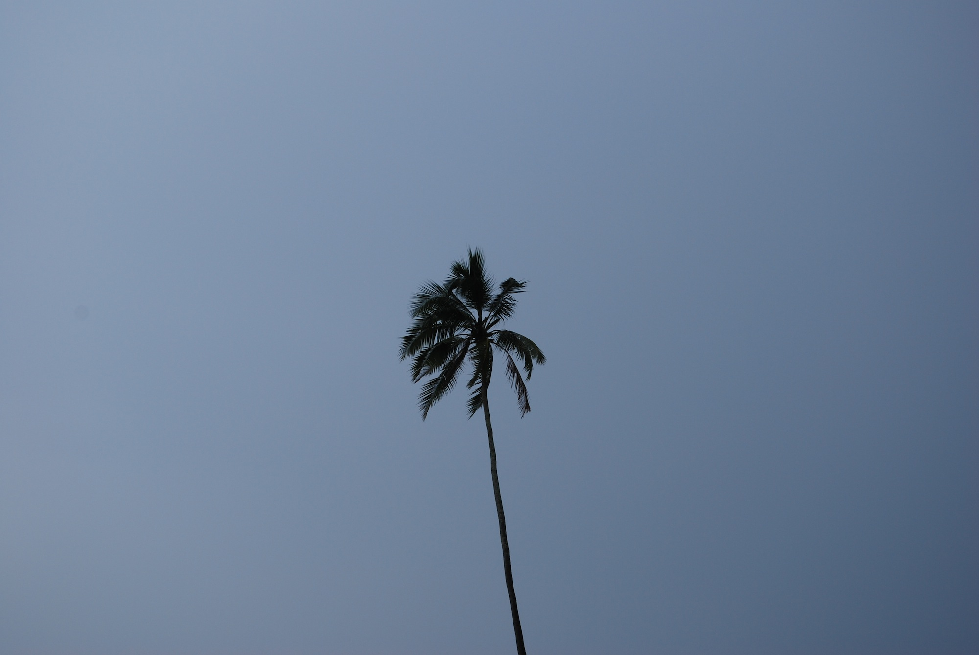 Palm tree reaching up to the sky