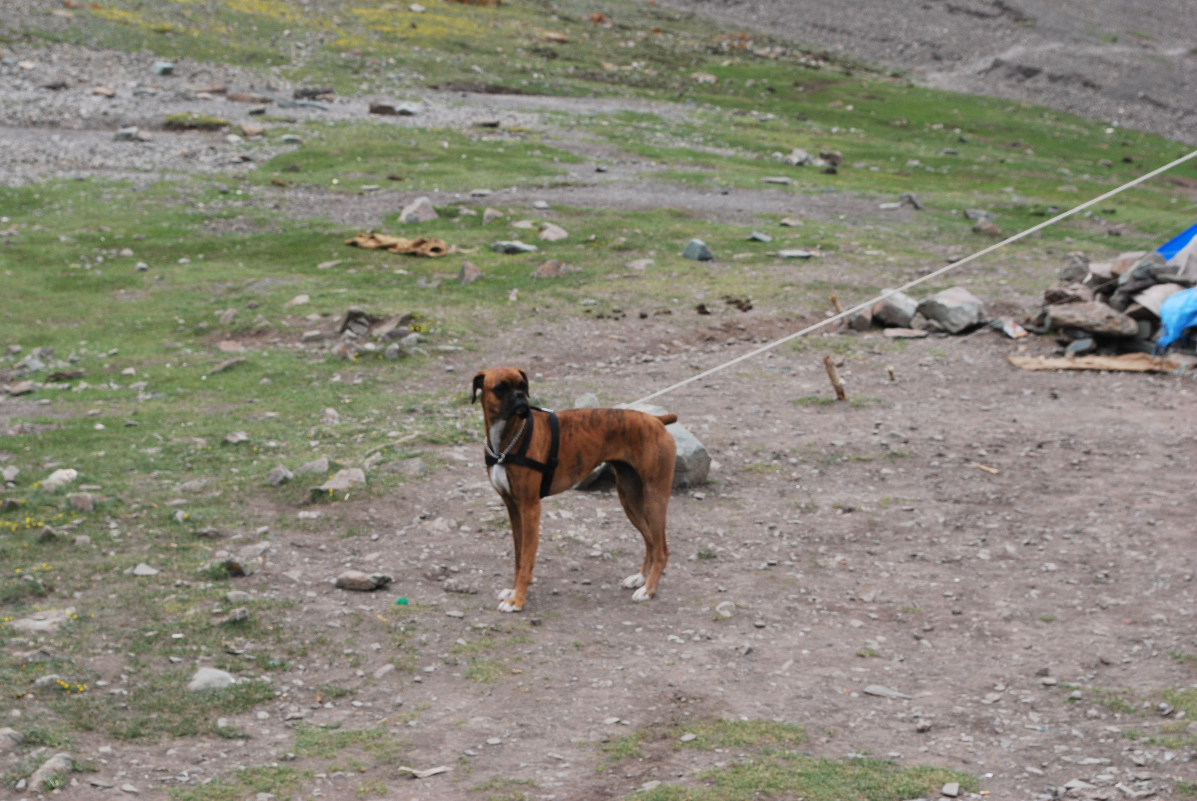 1. Santi, the boxer at the Stok Kangri Base Camp - 5100m