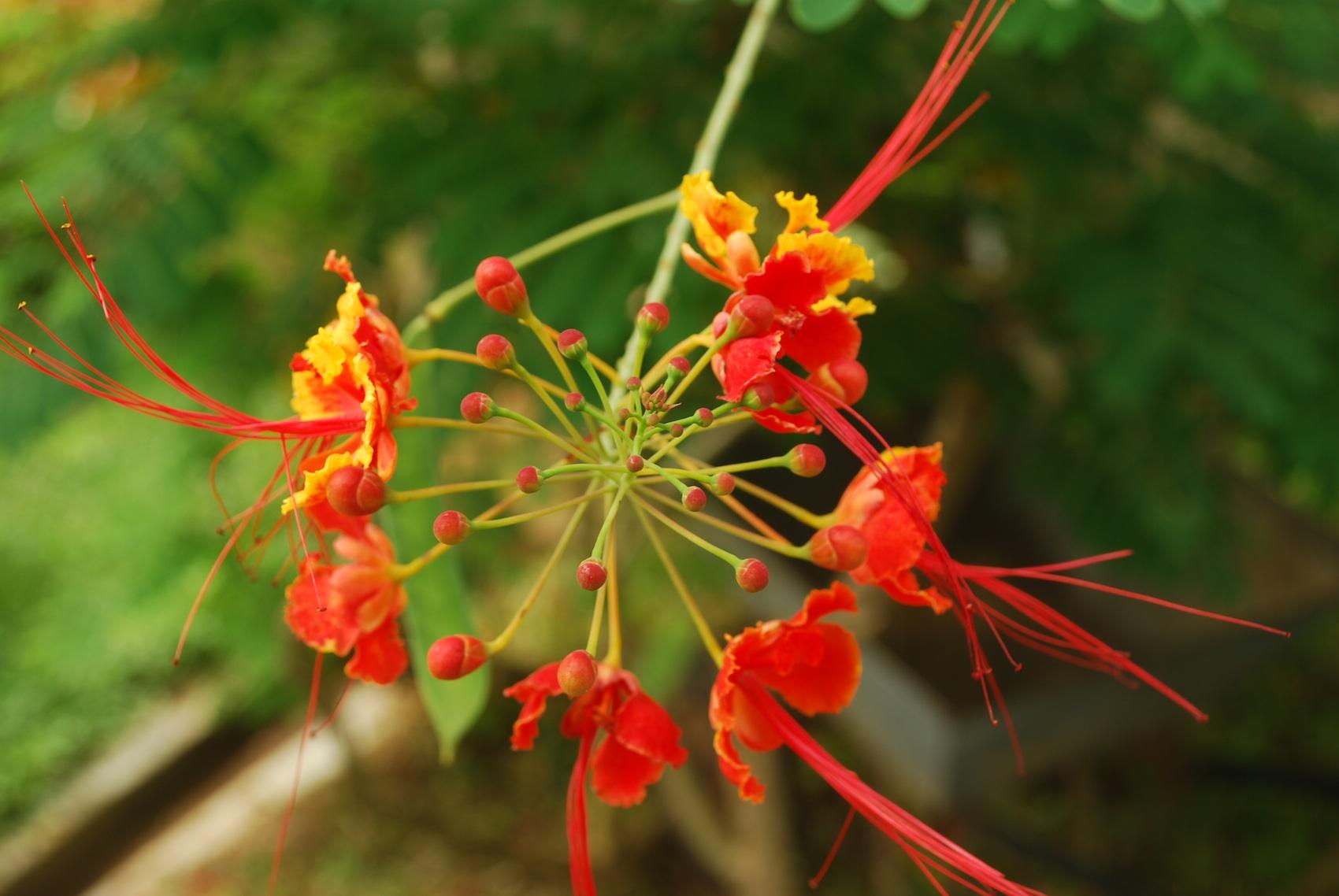 Flowers from Kerala