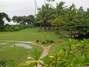 Garden by the Ocean