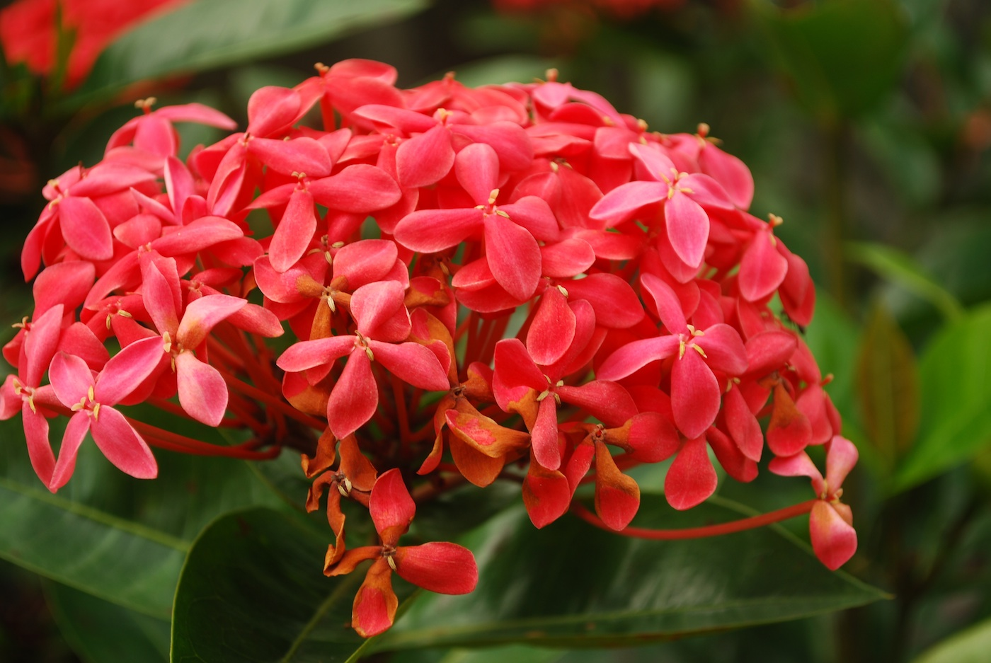 Flowers from Kerala