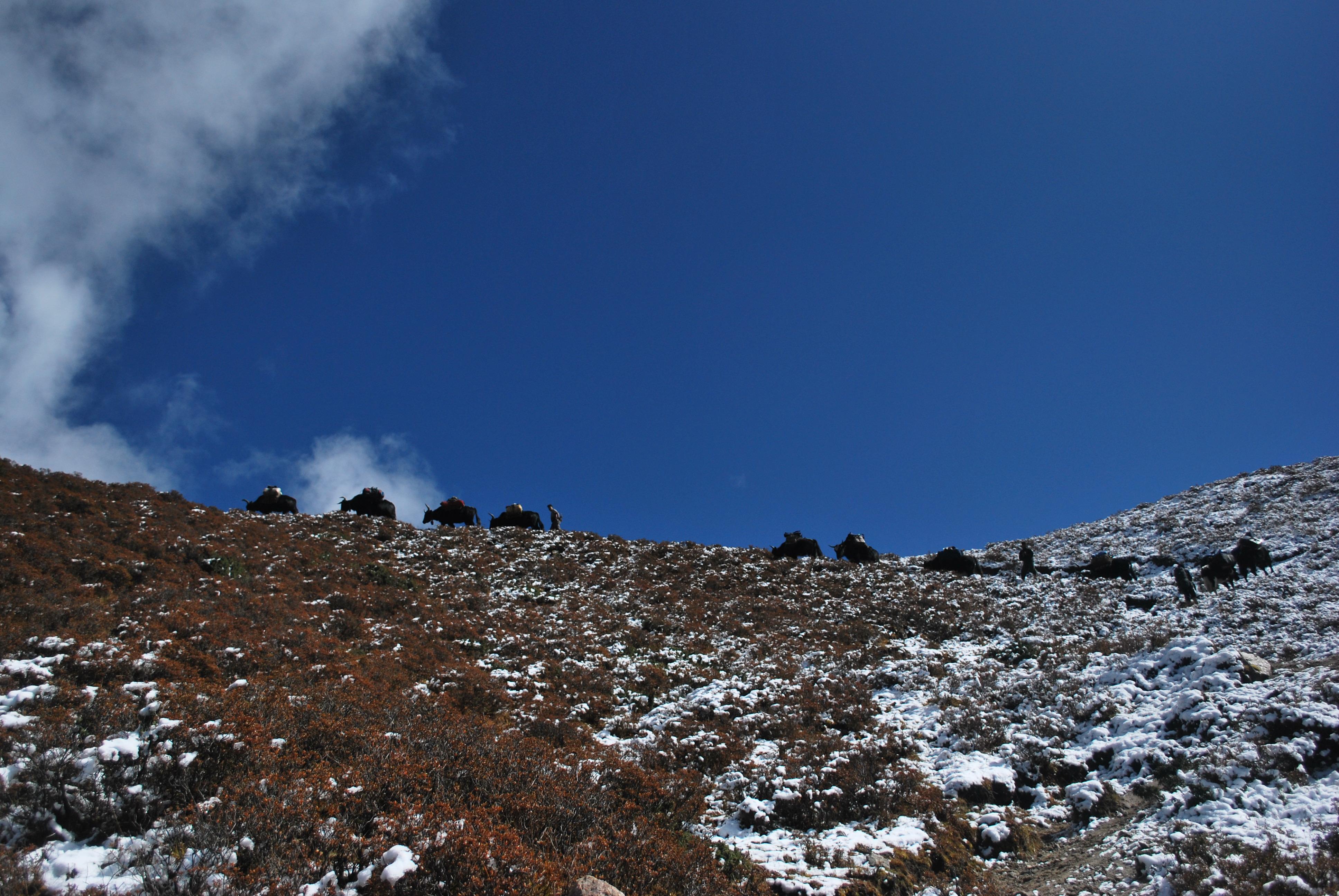 7. Beyond Dzongri 1100