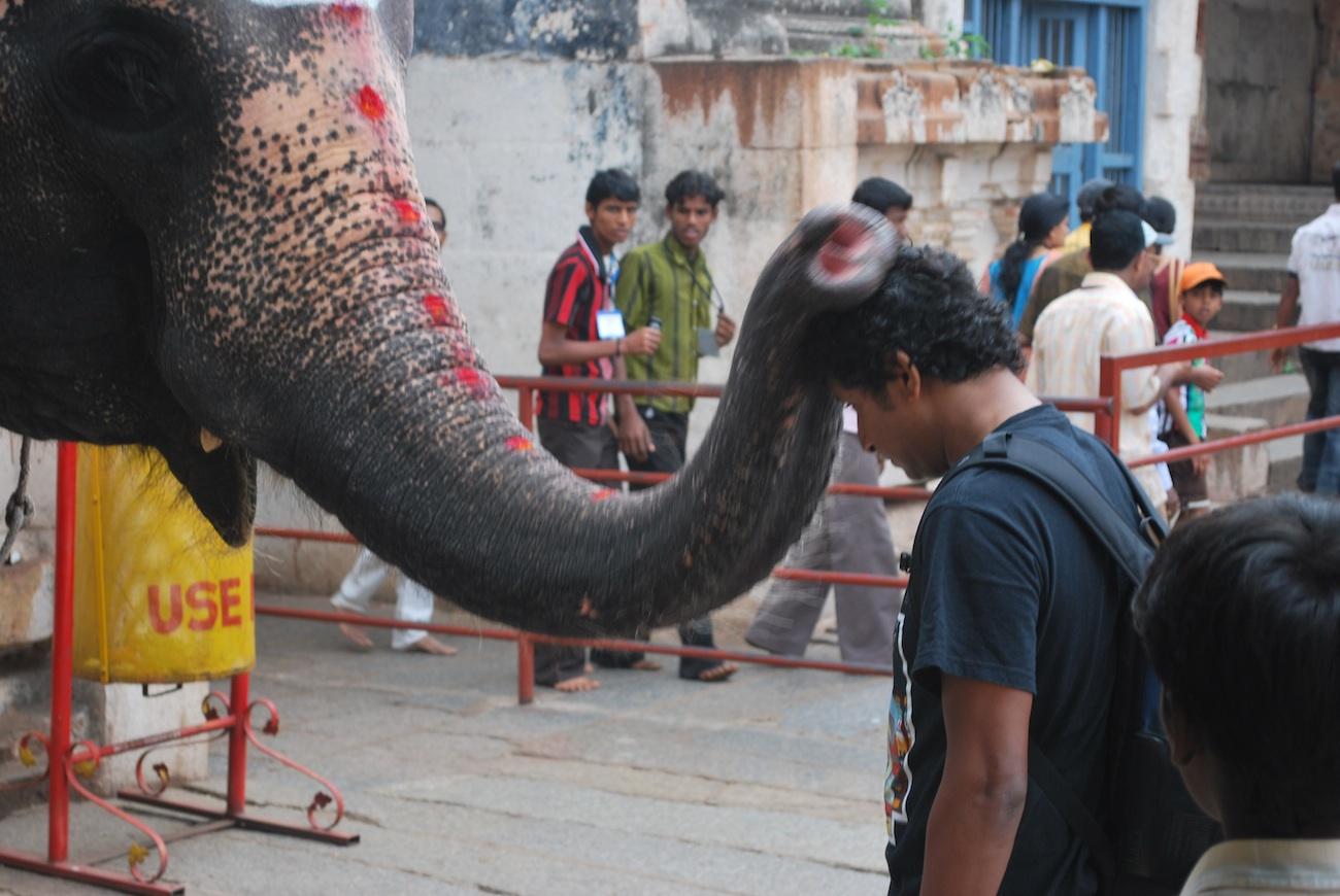 Blessings from the Temple Elephant, Lakshmi