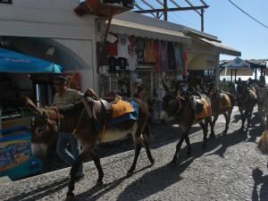 Donkey rides_Santorini