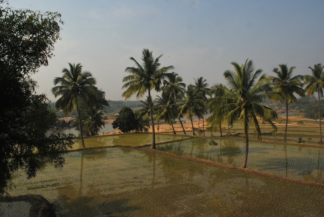 Paddy fields - view from the guest house