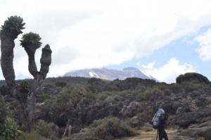 Vegetation on the way to Kilimanjaro